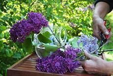 flieder in der vase flieder wohnen und garten garten