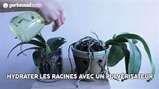 comment arroser une orchid 233 e comment cultiver potager