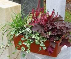balkonpflanzen herbst winter herbst winterbepflanzung blumenkasten pflanzen f 252 r