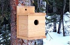 cedar bird house plans build a cedar birdhouse for 2 ana white