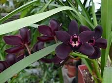 Jenis Flora Di Indonesia Pengertian Wilayah Dan Gambar