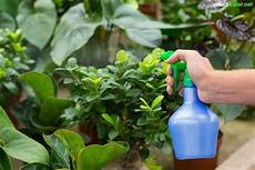 Bio Spritzmittel Gegen Sch 228 Dlinge Und Pflanzenkrankheiten