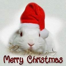merry christmas bunny rabbits real pinterest merry christmas bunnies and christmas