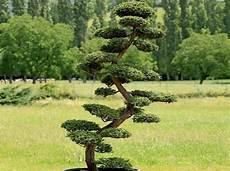 arbre décoratif extérieur 29450 comment tailler ses arbres en nuage d 233 coration