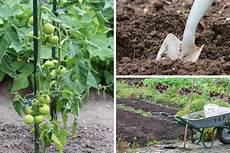 Tomaten Setzen Wann Der Beste Zeitpunkt Zum Pflanzen Ist
