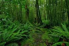 Contoh Ekosistem Hutan Hujan Tropis Contoh Waouw