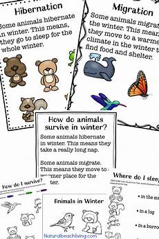 animals in winter worksheets for kindergarten 14199 winter animals for preschool activities living