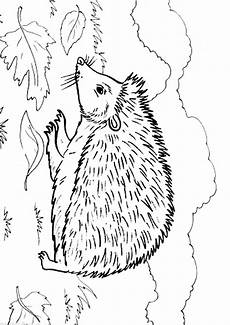 hedgehog coloring page animals town animal color