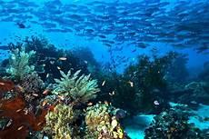 Kepulauan Raja At Yang Eksotis Pesona Keindahan Alam