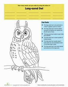 eared owl facts worksheet education com