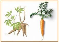 Perkembangbiakan Tumbuhan Secara Vegetatif