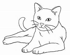 gambar mewarnai hewan kucing gambar mewarnai hewan