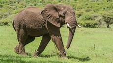 Fauna Asiatis Pengertian Ciri Ciri Gambar Dan Contohnya