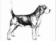 Find A Breeder   Dogs Queensland   CCC(Q)