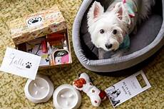 4 dog friendly hotel staycations in singapore vanillapup