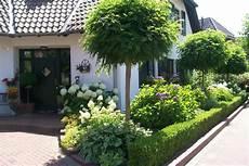 baum kleiner garten vorgarten kugelbaum kert garden terrace garden und