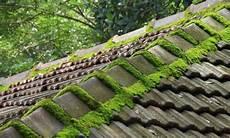 mousse sur le toit comment lutter contre la mousse sur les toits toitcommeneuf