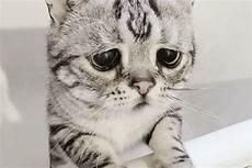 Kenalkan Luhu Kucing Berwajah Sedih Yang Jadi Selebgram Dunia