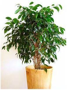 201 pingl 233 sur plants for landscaping