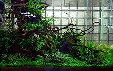 ada aquascape tank photos with lots of verticle driftwood the planted