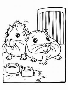 meerschweinchen malvorlage meerschweinchen niedliche