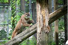 animal worksheets in 13905 binghamton zoo at ross park binghamton discovernepa