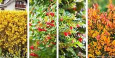 Les 6 Plantes 224 Privil 233 Gier Pour Une Haie De Jardin