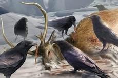 il banchetto dei corvi corvo le cronache ghiaccio e fuoco wiki