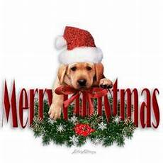 495 best christmas cats dogs images in 2019 christmas cats dogs christmas animals