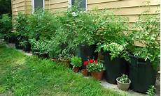 container garden wikipedia edmonds parks and rec offering edible container gardening