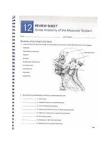 gross anatomy of the muscular system review sheet 12 fill in the blank study guide chapter five