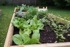 Build Raised Garden Beds Fall Vegetable Gardening Tips