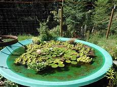 cool water garden s in the garden