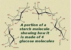 khq storing glucose