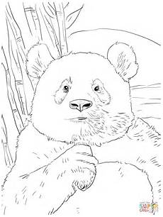 panda portrait coloring page free printable coloring pages
