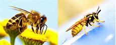 Biene Malvorlagen Xing 14 187 Nicht Verwechseln Biene Links Wespe Rechts
