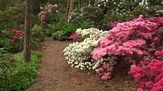 beautiful flowers brueckner rhododendron gardens youtube