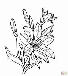 Malvorlagen Gratis Lilien Ausmalbilder Ausdrucken Blumen