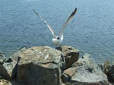 Seagull Apartments Ks by San Diego Ca Sea Gull Landing Photo Picture Image