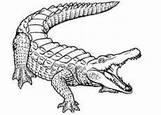 kostenlose malvorlagen krokodil krokodil 019 kostenlose malvorlagen und ausmalbilder auf