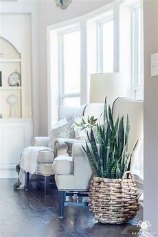 Living Room Home Decor Ideas With Plants by Snake Plant In Basket For Winter Houseplant Decorating