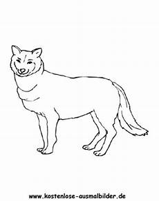 kostenlose malvorlagen wolf kostenlose ausmalbilder ausmalbild wolf 2