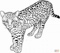 leopard 5 coloring page free printable coloring pages