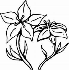 orquidea nacional para colorear orquidea nacional para colorear imagui