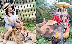 Duduk Atas Harimau Tour Naik Gajah Netizen Desak Fara