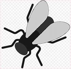 Insekten Ausmalbilder Kostenlos 56 Das Beste Ausmalbilder Insekten Bilder In 2020 Mit
