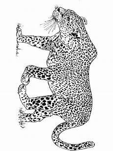 leopard coloring pages and print leopard