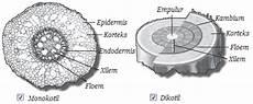 Berbagainfo Struktur Jaringan Tumbuhan