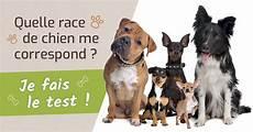 choisir chien test bien choisir la race de chien notre test
