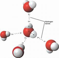 hydrogen bond diagram how many hydrogen bonds are attached to each water molecule in a solid state how many in a